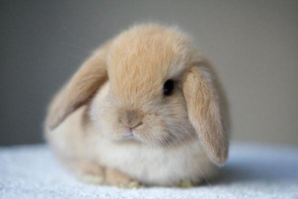 У Вас будет… кролик!