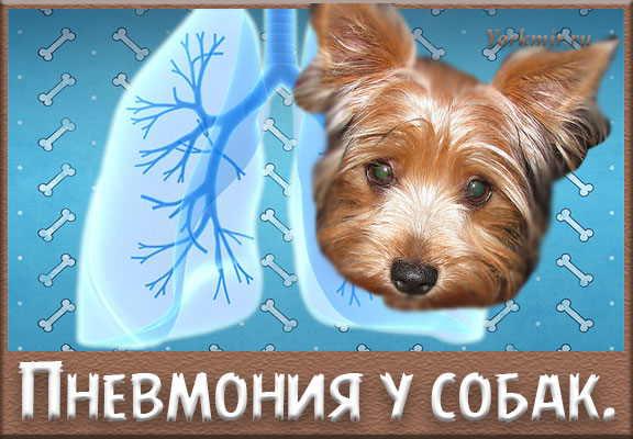 Пневмония у животных