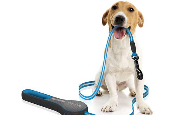 Выбираем поводок для собаки