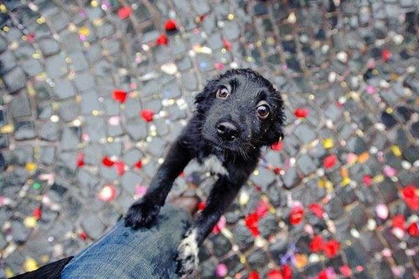 Если собака боится взрывов петард