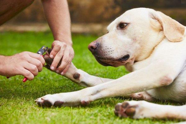 Как правильно подстричь когти собаке?