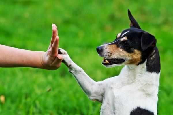 Длительные прогулки: каким породам собакам это необходимо?
