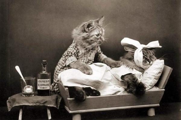 Особенное питание для котов после кастрации