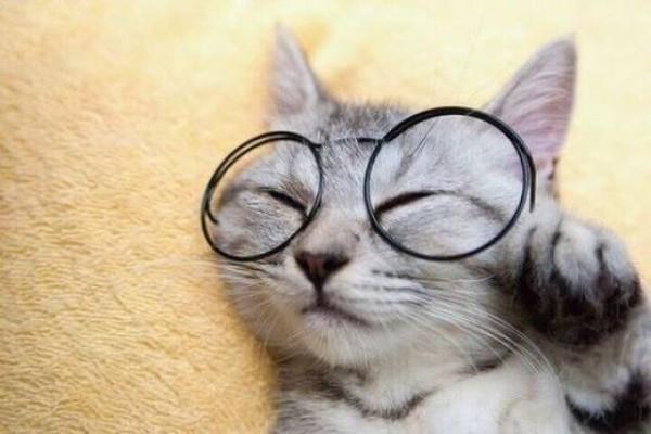 Кошка в преклонном возрасте: как продлить счастливую жизнь питомца