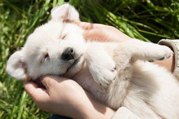«Усыновление» щенка из приюта: что нужно знать новым владельцам?