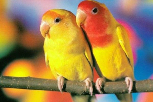 Если Вы решили завести попугайчика