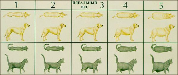 ожирение собак