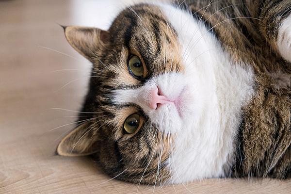 Ожирение собак и кошек