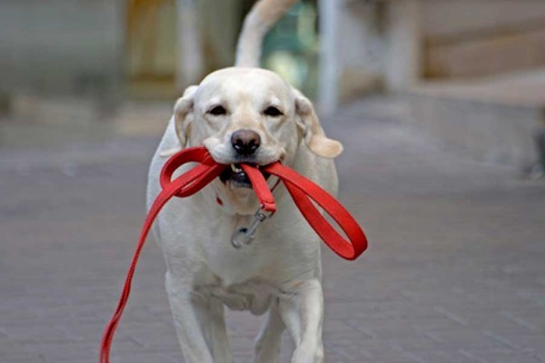 Собака на прогулке: что нужно учесть